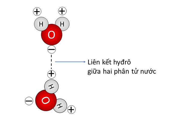 Cấu trúc phân tử của nước
